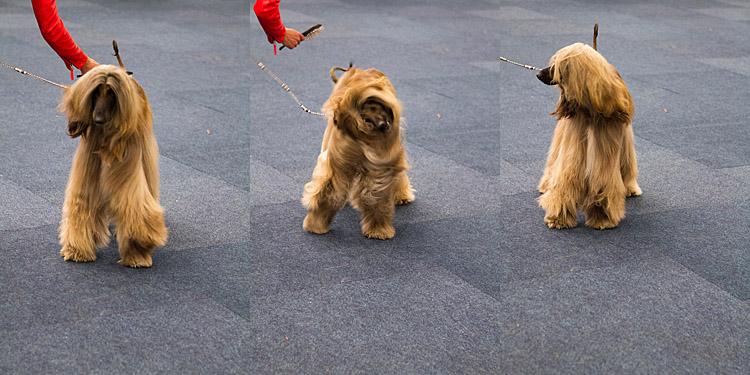 Hund und Heimtier 2013 (17)