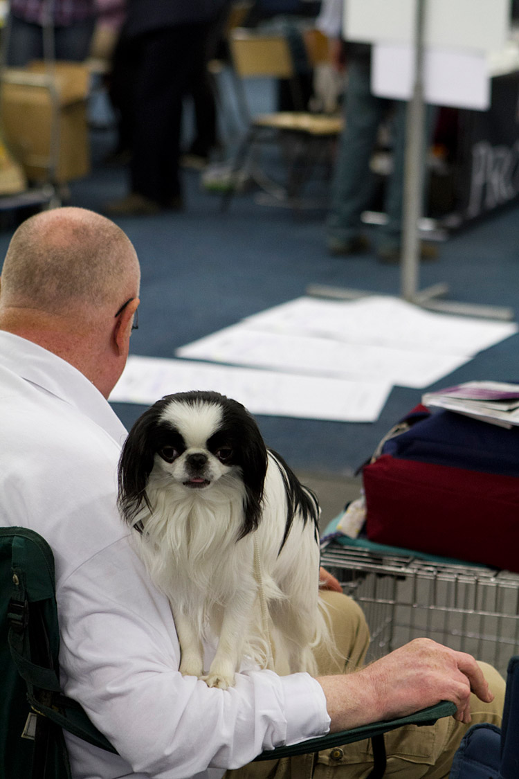 Hund und Heimtier 2013 (16)