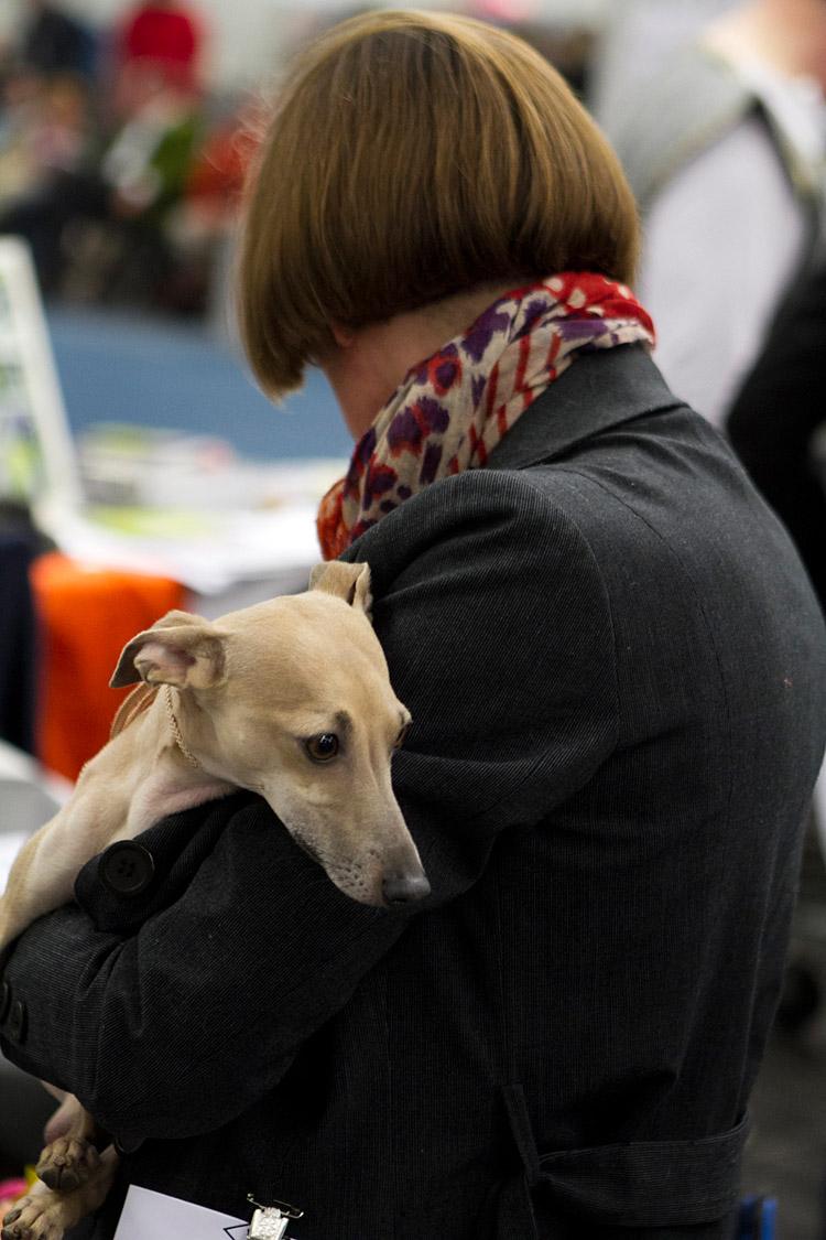 Hund und Heimtier 2013 (15)