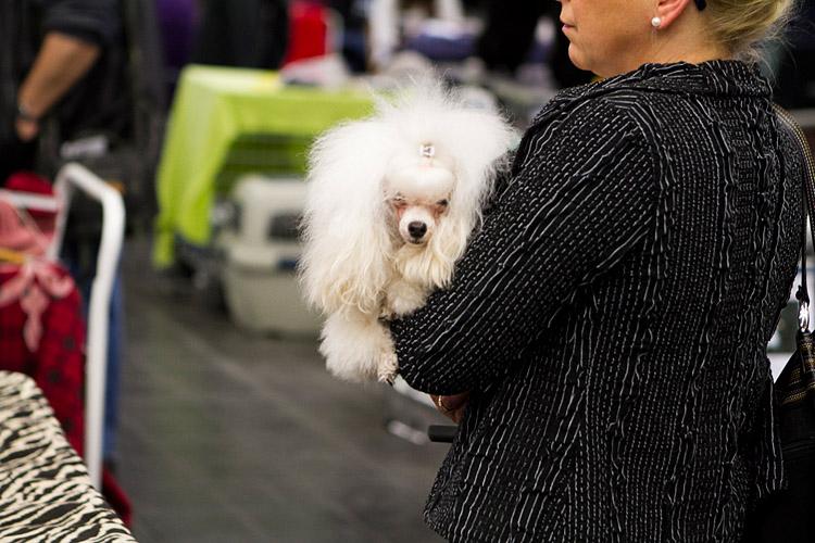 Hund und Heimtier 2013 (11)