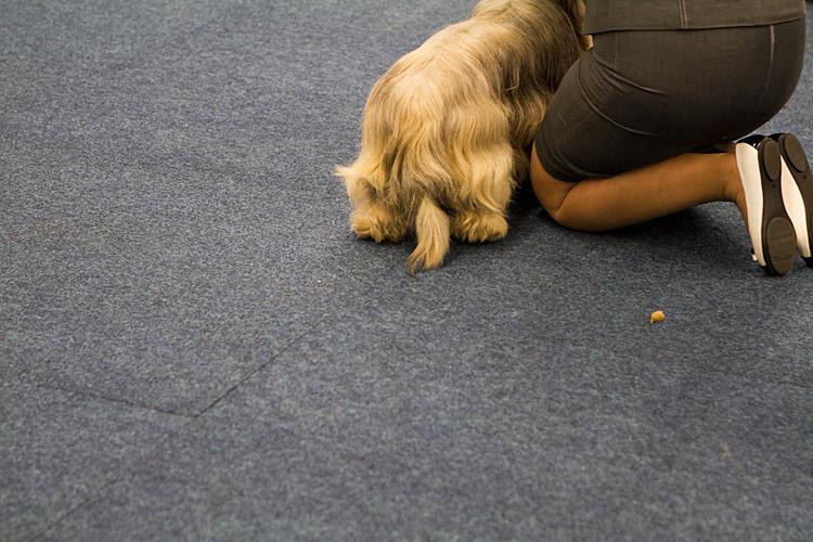 Hund und Heimtier 2013 (6)