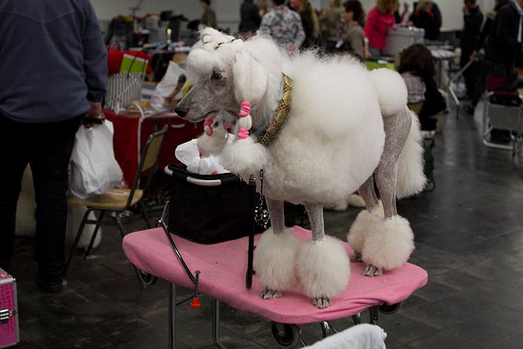 Hund und Heimtier 2013 (2)