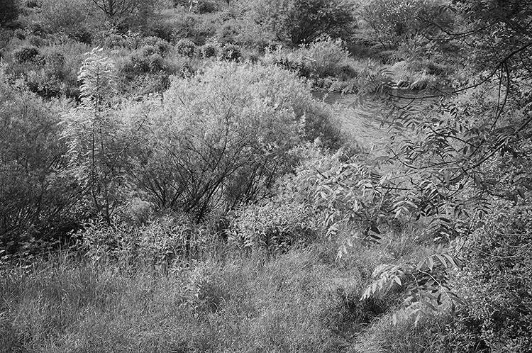 ruhrtalradweg_DSF2152