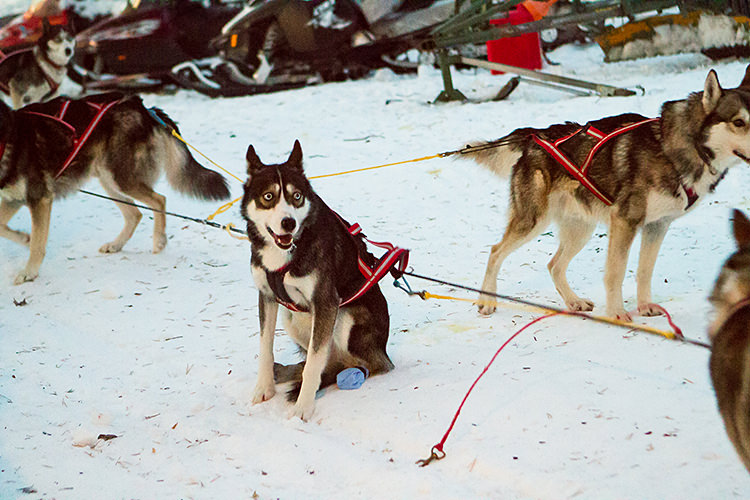 jokkmokk_dogsled_MG_2643