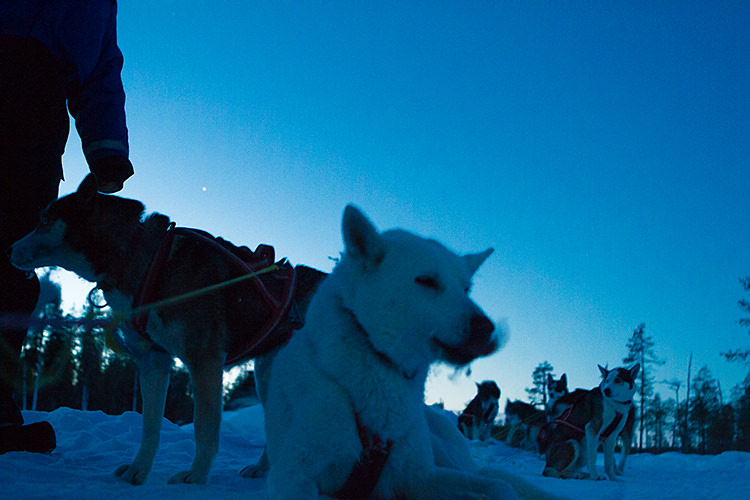 jokkmokk_dogsled_MG_2659