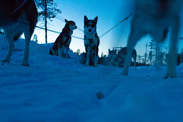 jokkmokk_dogsled_MG_2662