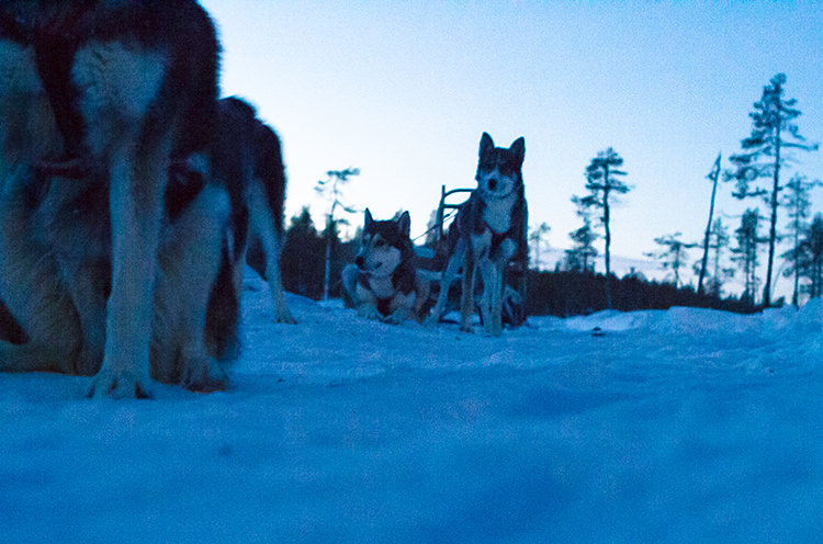 jokkmokk_dogsled_MG_2665
