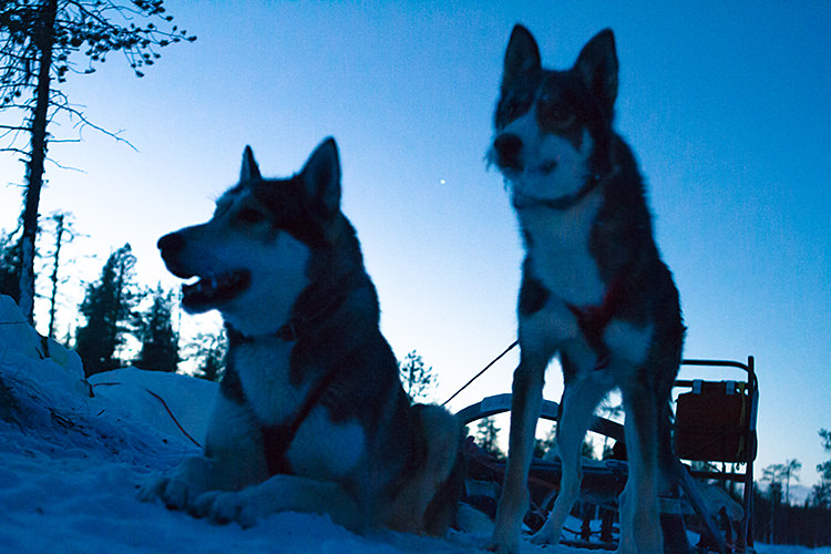 jokkmokk_dogsled_MG_2668